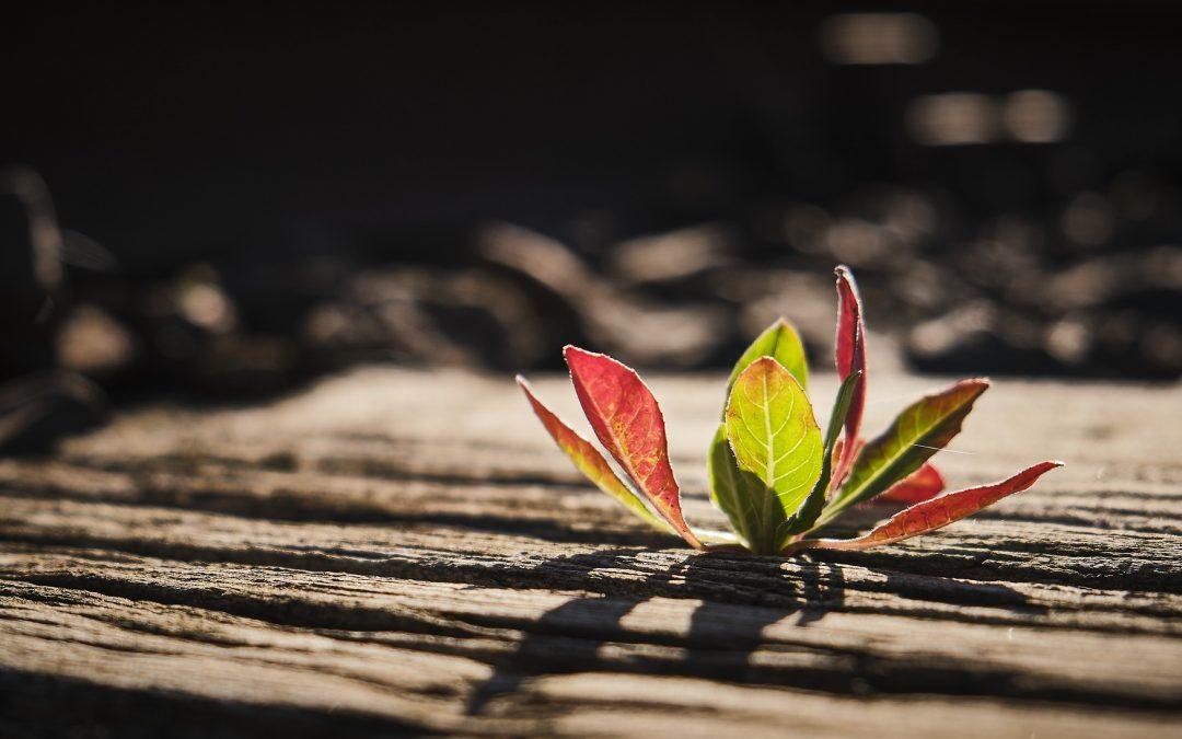 Im Flow zu mehr Nachhaltigkeit im Unternehmen. Ein Skript für den Wandel